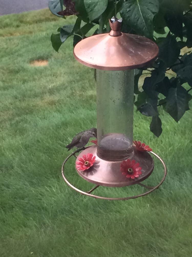 Hummingbirds (2/2)